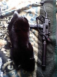 猫サイズ検証