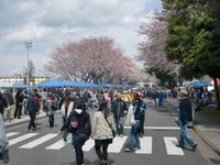 日米親善 キャンプ座間 桜まつりに潜入