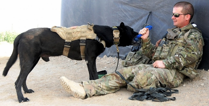 Dogs Saves U S Soldiers