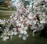 春の楽しい1日♪