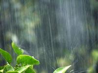 雨天中止のお知らせ