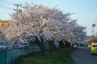 Spring has come in Hachinohe.やっと八戸にも春が来た^^