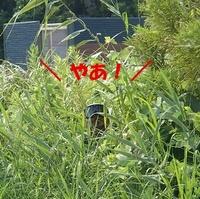 【レビュー】アイボリーコースト風装備