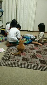 訓練予定とは関係ありませんが、写真の猫のはなです(^ω^)