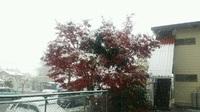 雪がふっちょります(*´Д`)