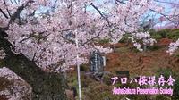 アロハ桜、植樹リエナクトとプロジェクトへのご協力のお願い。