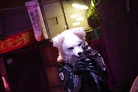 ケモノ meets 九龍 戦闘市街区 photo by ロン