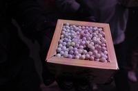 【イベントレポ】豆サバ2018!今年は南南東!