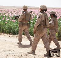 新商品とお花畑と米軍