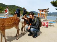 厳島神社と鹿