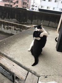 猫が立った、、、!