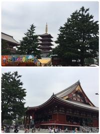 水戸ちゃん  のち   プール⁈ 2017/07/17 07:47:11