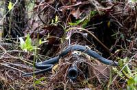 「野生のヘビすら気付かない」。米州兵スナイパーが完璧に擬装