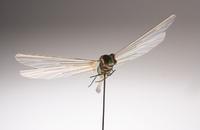 重量わずか1グラム 70年代に作られたCIAのトンボ型盗聴ドローン「Insectothopter」
