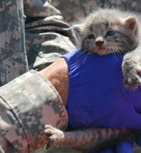 米陸軍のコブラ攻撃ヘリコプター機体内部に侵入した「子猫」が救出。愛くるしいその姿がネット上で話題に