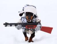 大きなライフルを携えて雪原を愛くるしく動き回るダックスフントのハンター
