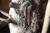 「自然が戦争に勝った」樹木に飲み込まれたナチス・ドイツの「MP40」短機関銃
