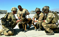 爆発物を発見する探知犬に新技術
