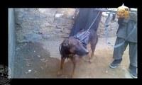 タリバーンに捕まっちゃった軍用犬、おびえてます(ToT)