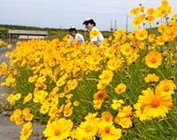 海上自衛隊鹿屋基内地に咲く「特攻花」