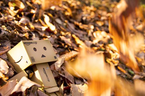 枯葉とダンボー