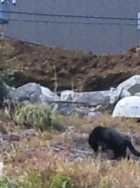 黒猫は荒野を目指す