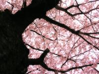 春色パラコード